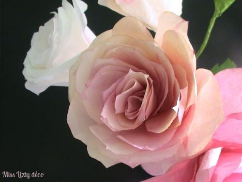 roses (12)