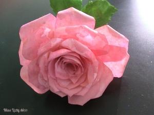 roses (13)